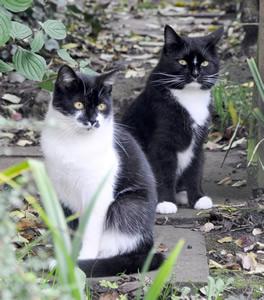 Lenny and Georgie