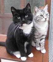 Frankie and Darcy